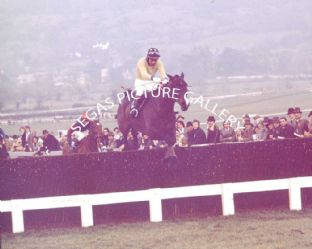 Royal Frolic with J Burke (675-01)